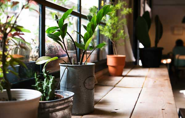 The Power of Indoor Plants for a Healthy Life